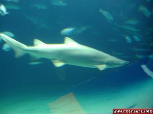 A small shark