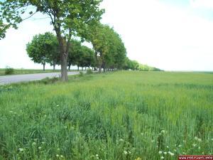 Near Sveshtari village